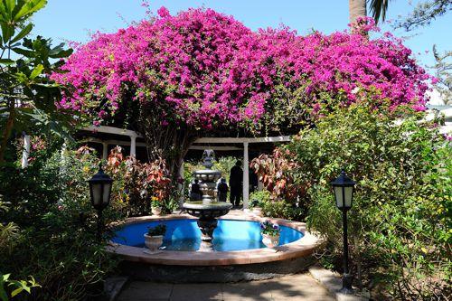 _Jardin Sitio Litre - Nicholas Kaye