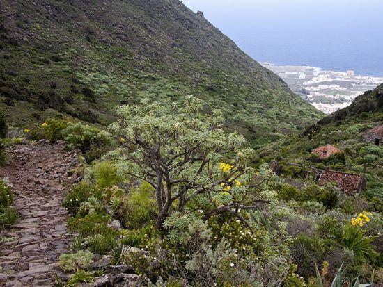 _Monte del Agua - D R Loewe