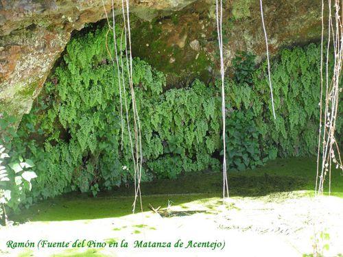 _Fuente del Pino - Ramon