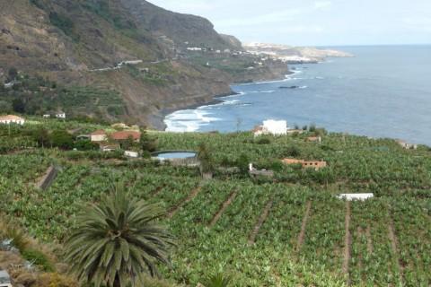 Costa de Los Realejos