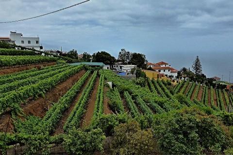 Zonas Agricolas – El Sauzal