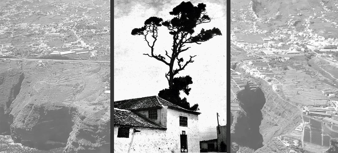 La Victoria de Acentejo, pino, Alonso Fernándezde Lugo, Tenerife, revista de ocio, vive el norte, cultura, historia